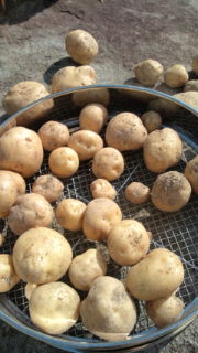 収穫!part<br />  2